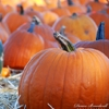 Denise Broadwell Photography - Pumpkin