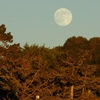 Denise Broadwell Photography - Natural Bridges Full Moon